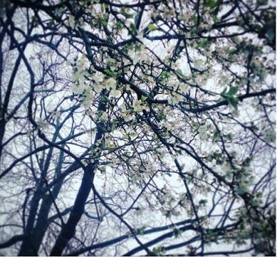 парченца софия: пролет в дъжд и бяло